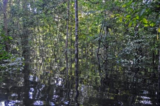 Mamiraua Reserve, AM: The flooded forest or vareza