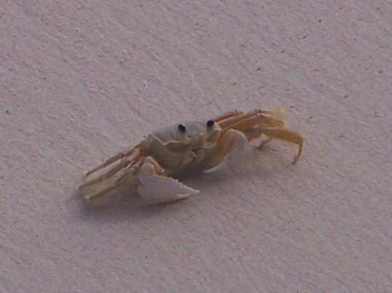 บาร์เบโดส: Amazing zoom on our camera picked up this little critter!