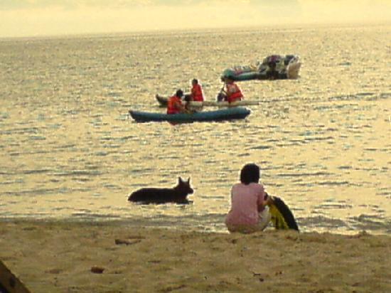Sai Kaew Beach Resort: Auf  der Hund darf mal schwimmen
