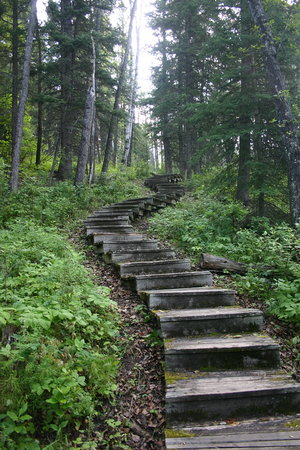 Waskesiu, แคนาดา: Shady Lake Trail - going back up