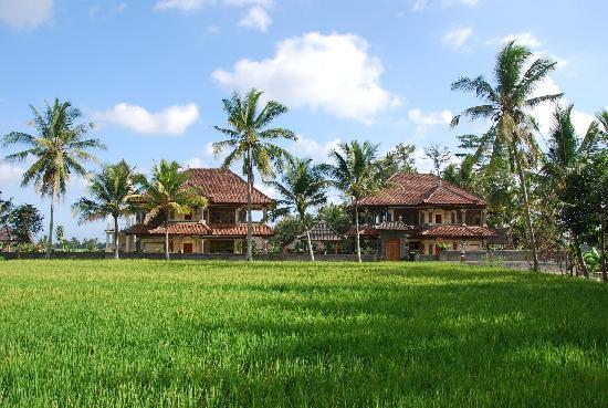 Villa Agung Khalia: The villa from the rice field