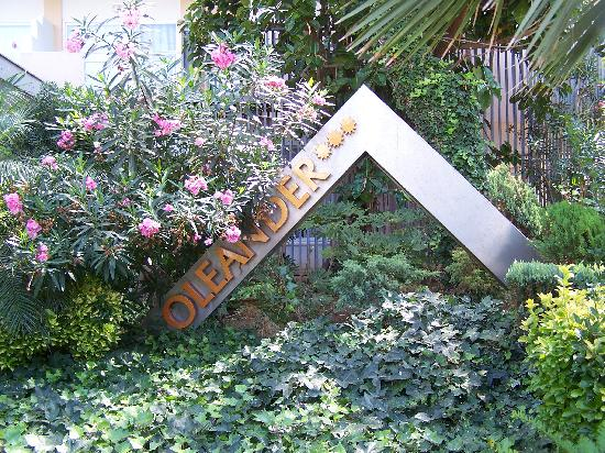 Hotel Oleander : ingresso dal vicolo