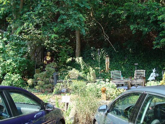 The Clarendon House: backyard