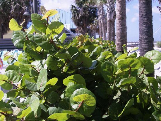 Hilton Clearwater Beach Resort & Spa: Hotel Flora