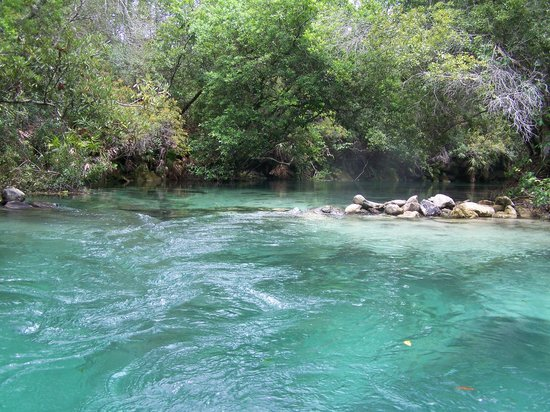 Weeki Wachee, Флорида: Weeki Wache River