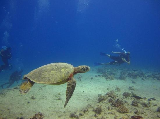 Oahu Diving: made sure we saw the best