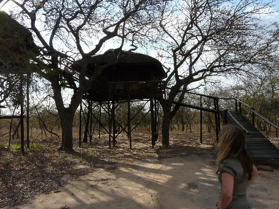 Pezulu Tree House Game Lodge: Another tree house