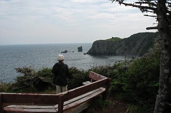 Port Rexton, Canada: Enjoying views, whales, and birds