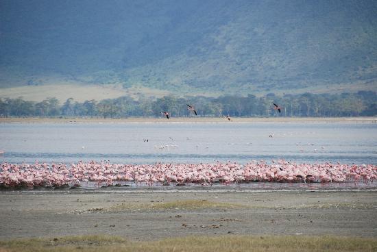 andBeyond Ngorongoro Crater Lodge: Flamingos in crater