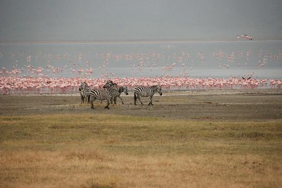 andBeyond Ngorongoro Crater Lodge: More Flamingos in the crater