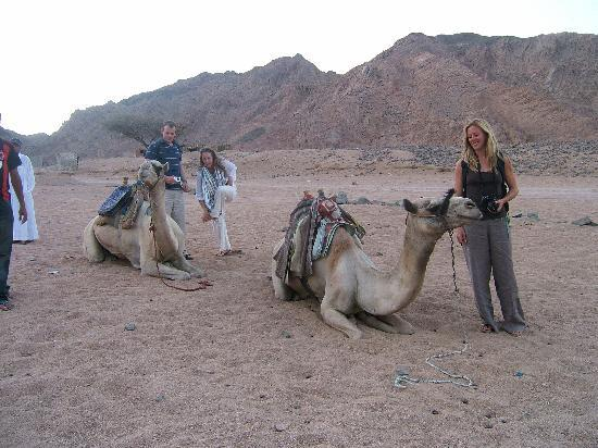 Coral Coast Hotel: off up the mountain for Bedouin dinner