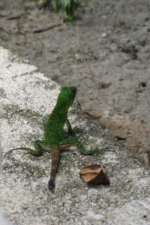 Gilded Iguana Hotel: SWEET