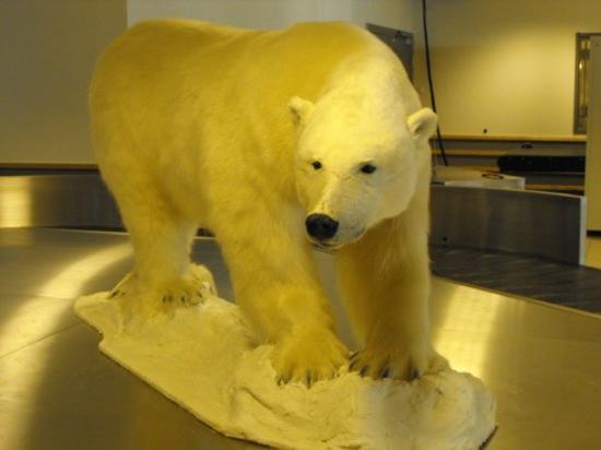 ลองเยียร์เบียน, นอร์เวย์: After you land in Svalbard this is what will be greeting you when you step inside the airport!