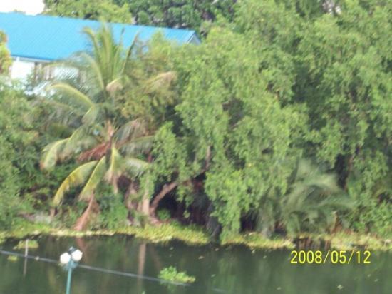 View at Dagupan city