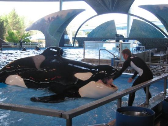 SeaWorld San Antonio: Shamu - Killer Whale Sea World San Antonio Texas
