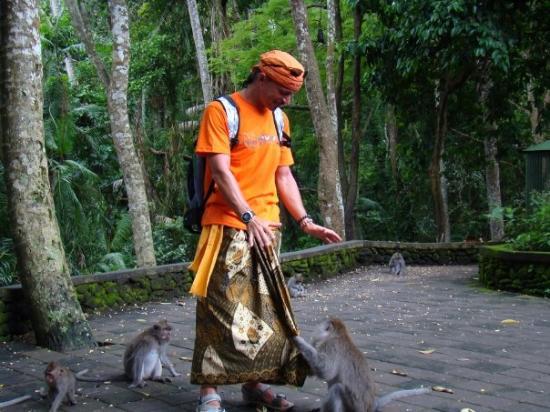 อูบุด, อินโดนีเซีย: Monkey Forest in Ubod / Bali / Indonesien