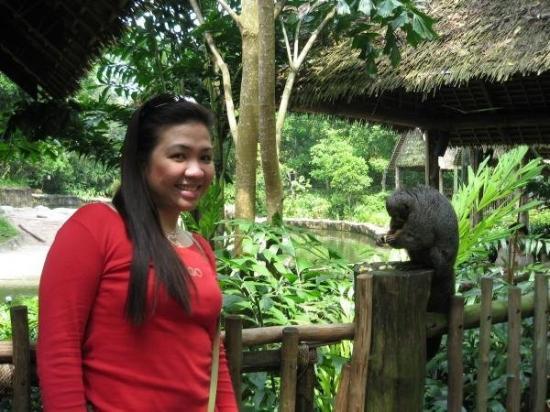 สวนสัตว์สิงคโปร์: singapore zoo - singapore '06