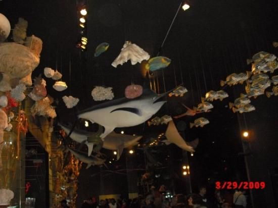 American Museum of Natural History: fish on the ceiling