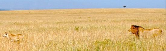 เขตอนุรักษ์แห่งชาติมาไซมารา, เคนยา: Masai Mara