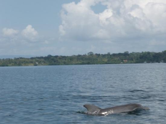 Bocas Town, ปานามา: Dolphin Bay