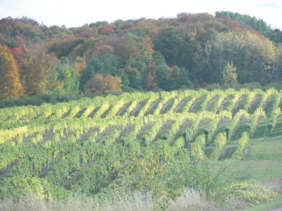 Chateau Grand Traverse Winery: Chateau grand Traverse
