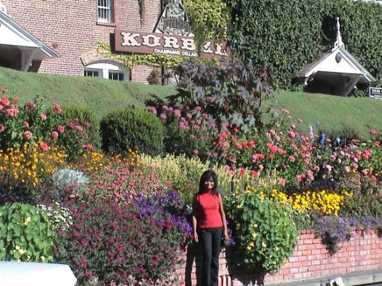 นาปา, แคลิฟอร์เนีย: me, korbel winery, napa valley, calif.