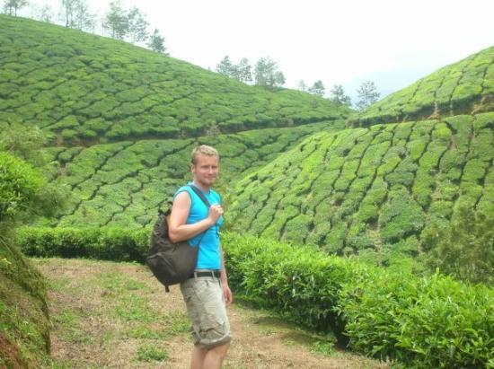 มุนนาร์, อินเดีย: Tea plantages