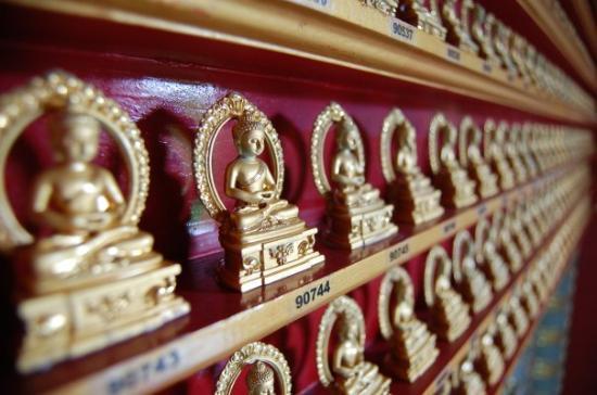 ไชน่าทาวน์: Budas to adopt