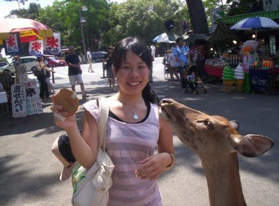 นะระ, ญี่ปุ่น: Fu feeding the deer senbei.