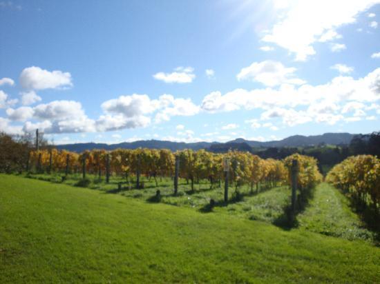 Mohio Tours: Winery Visit
