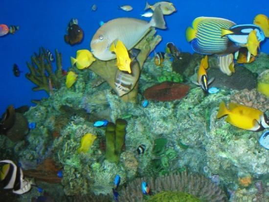 Charleston Sc Aquarium Picture Of Charleston Coastal