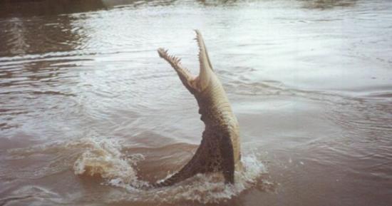 ดาร์วิน, ออสเตรเลีย: Jumping crocodile in Darwin, Australia