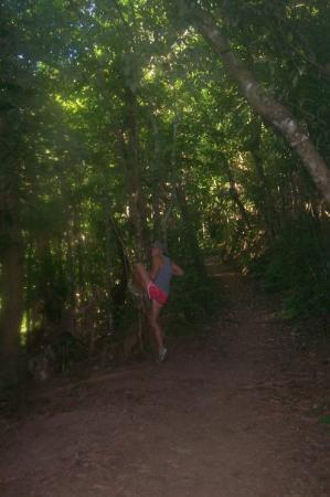 Dunk Island, ออสเตรเลีย: bit of tree loving on the way up kootaloo