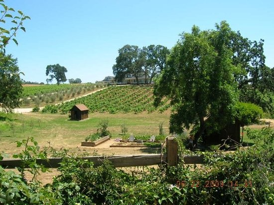 Sutter Creek, CA: Vineyards-Young winery