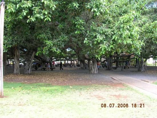 ลาไฮน่า, ฮาวาย: Banyan Tree Square-Lahaina