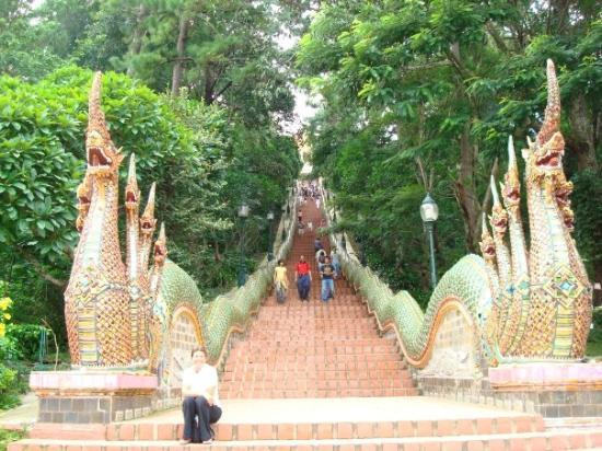 เมืองเชียงใหม่, ไทย: The thought of climbing all those stairs just for a slide down the Naga's tail makes it all wort