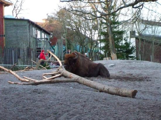สตอกโฮล์ม, สวีเดน: Skansen Open-Air Museum & Zoo