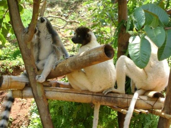 อันตานานาริโว, มาดากัสการ์: Antananarivo, Madagascar, Lemur's Park