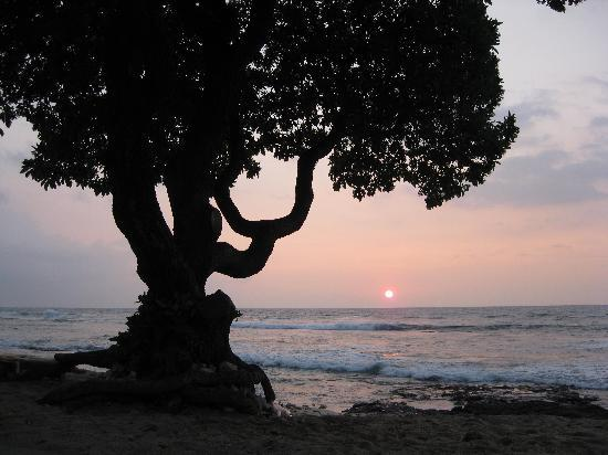 Four Seasons Resort Hualalai: The Beach Tree at Sunset