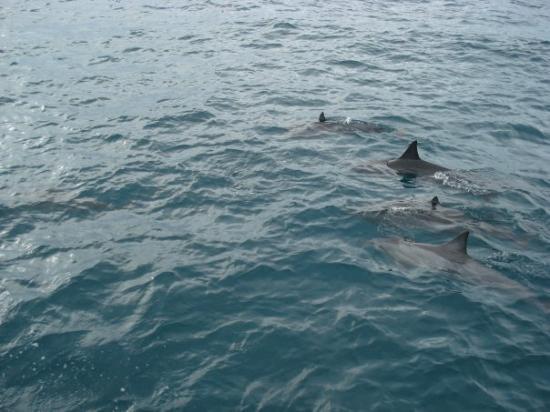 คาไว, ฮาวาย: Spinner Dolphins