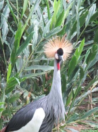 สวนนกจูร่ง: Jurong Bird Park