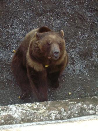 เบิร์น, สวิตเซอร์แลนด์: Bern's last living bear - 2009