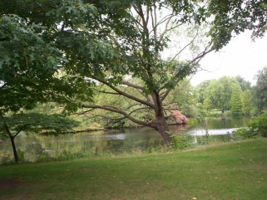 พระราชวังบักกิงแฮม: Buckingham Palace gardens (lake)