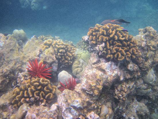 Mauna Kea Beach: More examples of the reef area for snorkeling