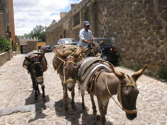 Hotel Casa Virreyes: Donkeys at work