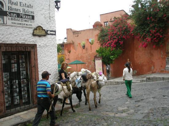 Posada Carmina Hotel: Donkeys at work