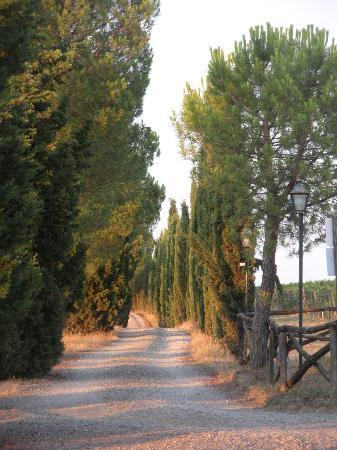 Tenuta San Vito: On the way to breakfast (500 m walk)