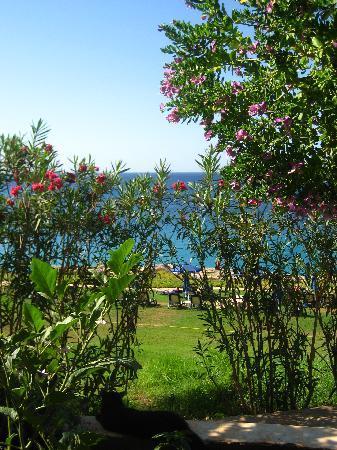 Atlantica Club Sungarden Hotel : View from the restaurant terrace