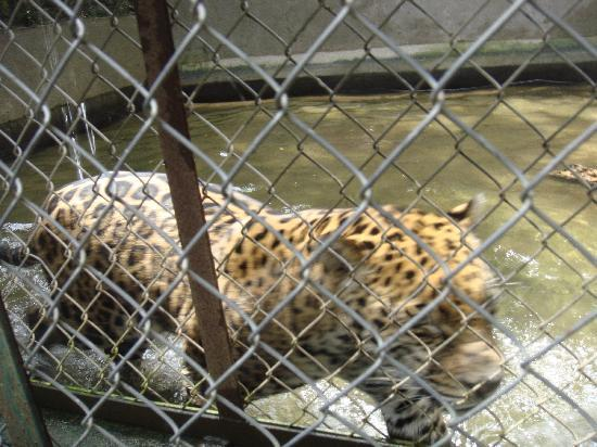 Barcelo Puerto Vallarta: Up Close Jaguar Zoo