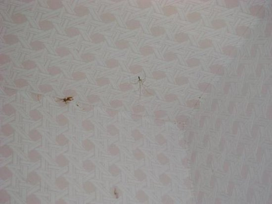 Chateau du Breuil: araignées de salle de bain